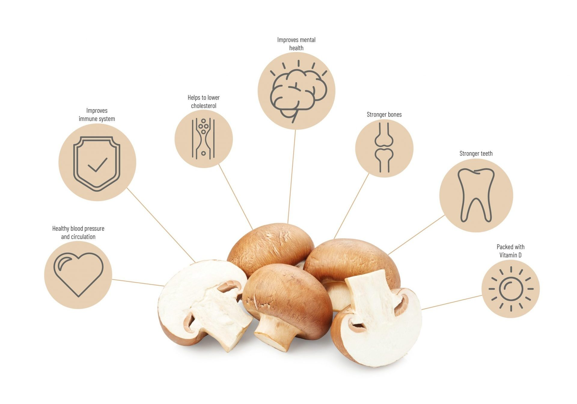 innovation Graphic which shows that mushrooms are rich in nutrients